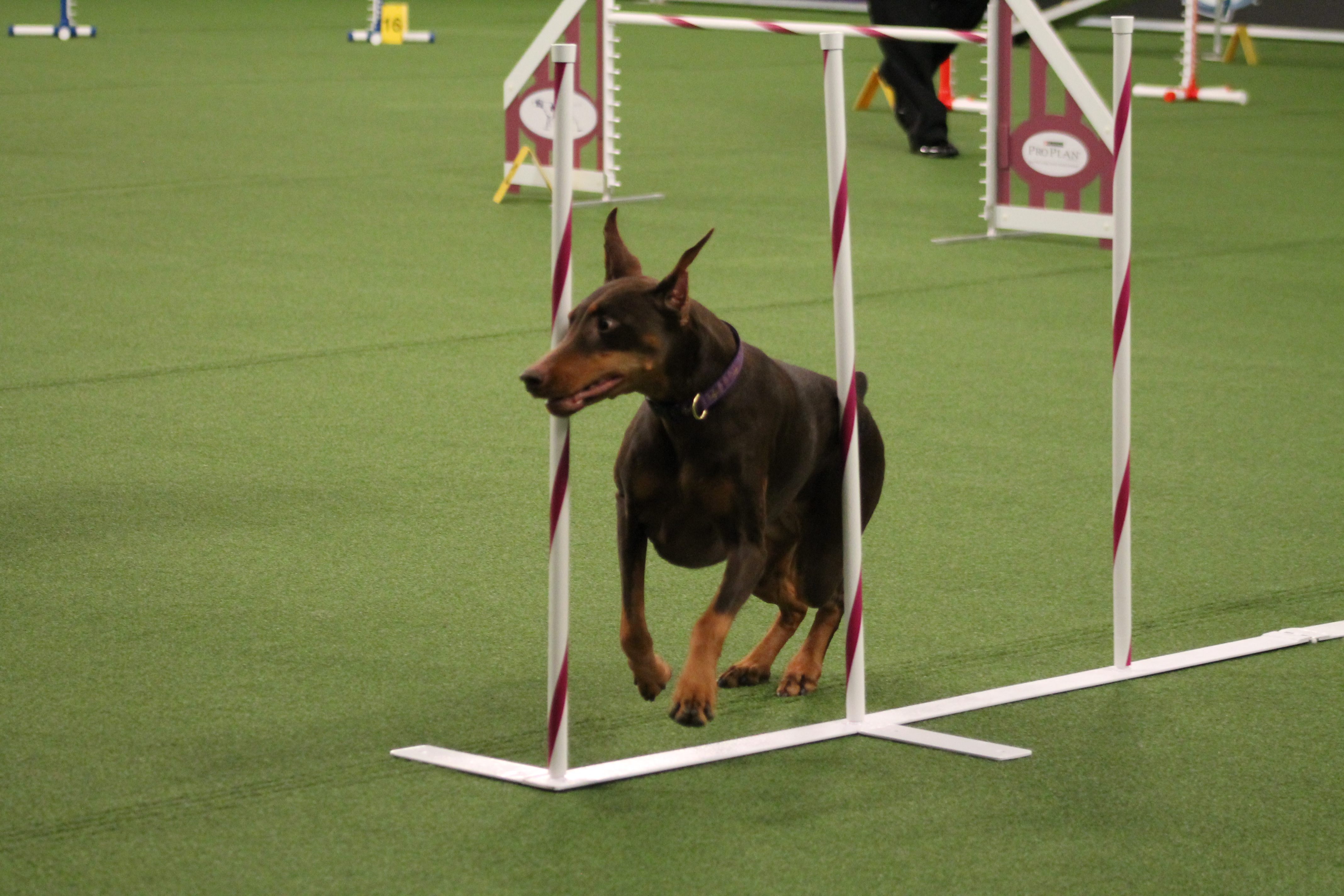 meet the breeds 2015 javits